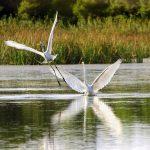 Bird-watching in Halkidiki