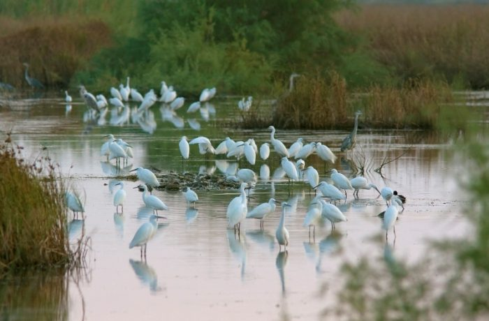 Sani wetland