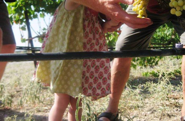 Visit an organic agricultural farm