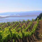 Tsantalis' vineyards at Mount Athos