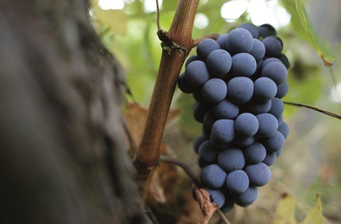 Wine & wineries