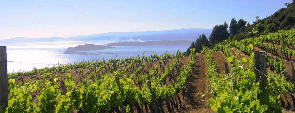 Tsantali Metohi Chromitsa Winery in Mount Athos
