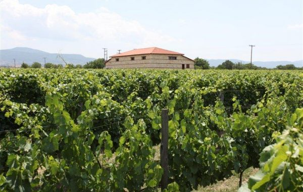 Visit a winery at Marathousa