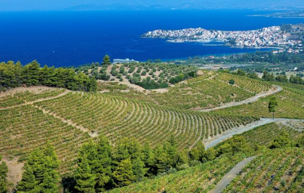 Visit a winery at Sithonia