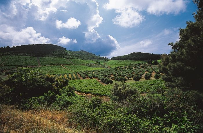 Visit a winery at Arnea