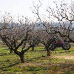 Fields of Nea Olynthos