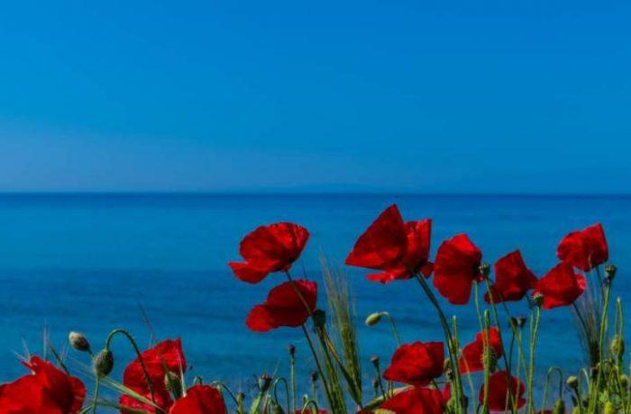 Vergia beach