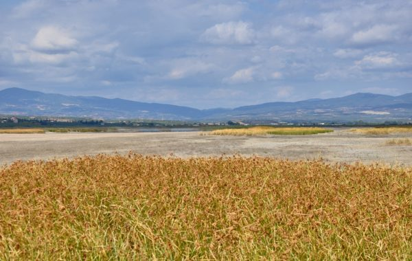 Agios Mamas wetland
