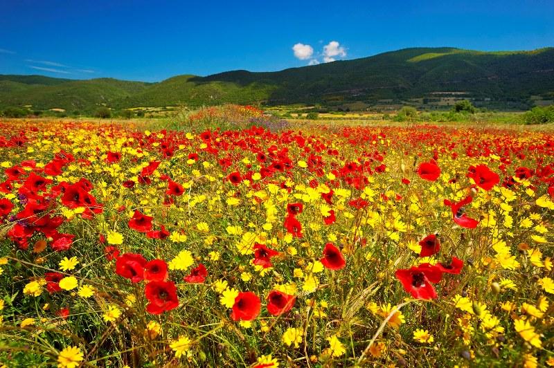 Spring time in Kassandra, Halkidiki