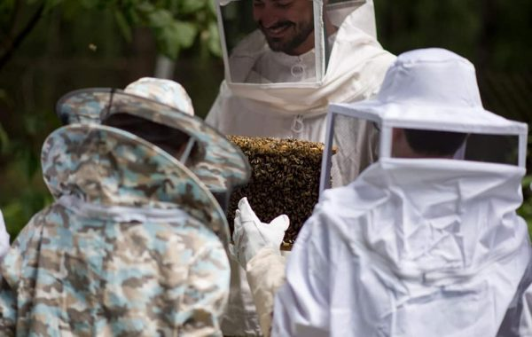 Become a beekeeper for one day!